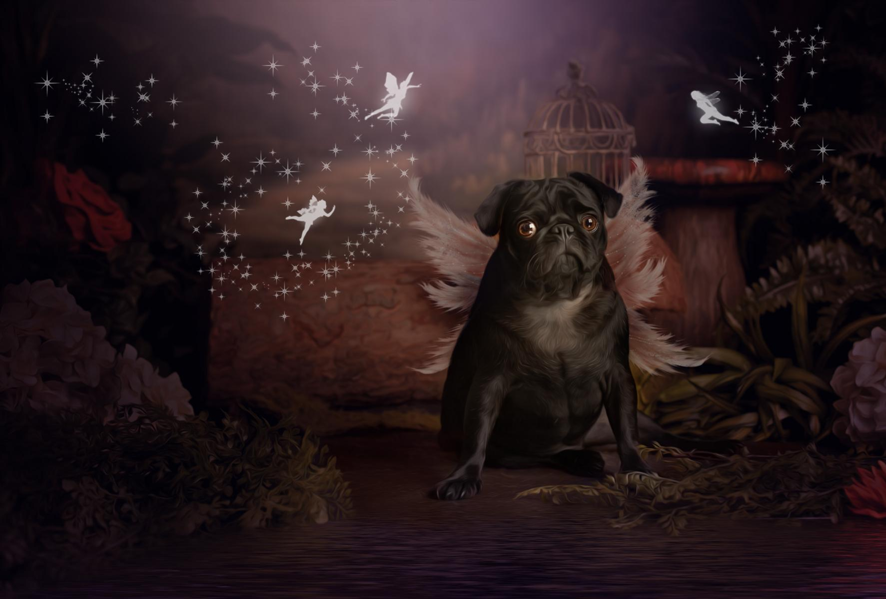Pet Fairy Photography