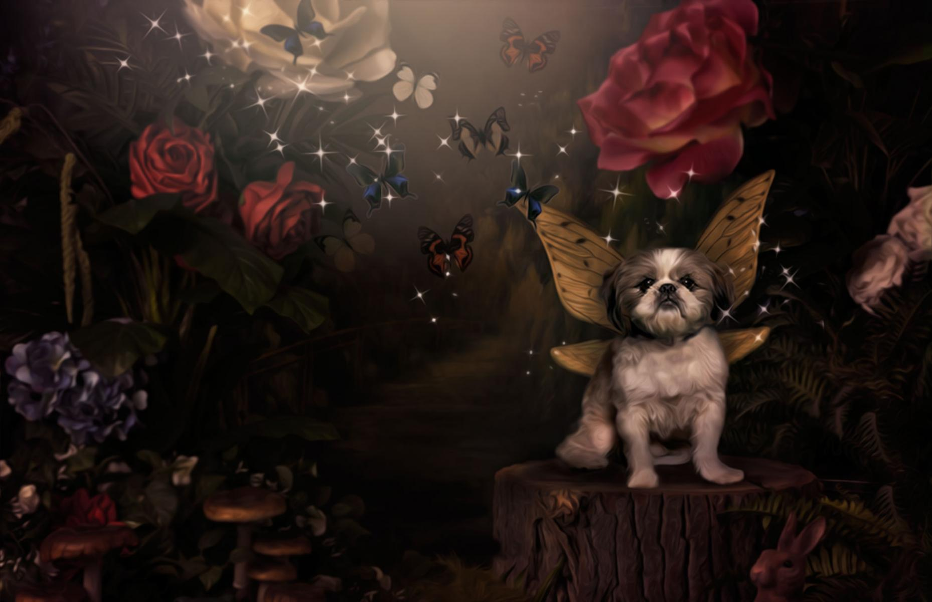 Pet Fairy Portraits